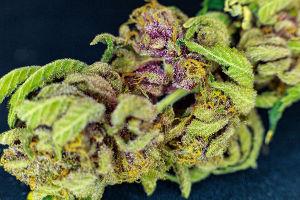 cannabis-olie van All by Hemp Amersfoort