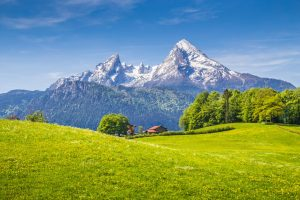 44130852 - idyllic landscape in the alps with fresh green meadows and blooming flowers and snowcapped mountain tops in the background, nationalpark berchtesgadener land, bavaria, germany